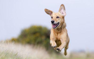 Aanbiedingen voor een gezonde hond