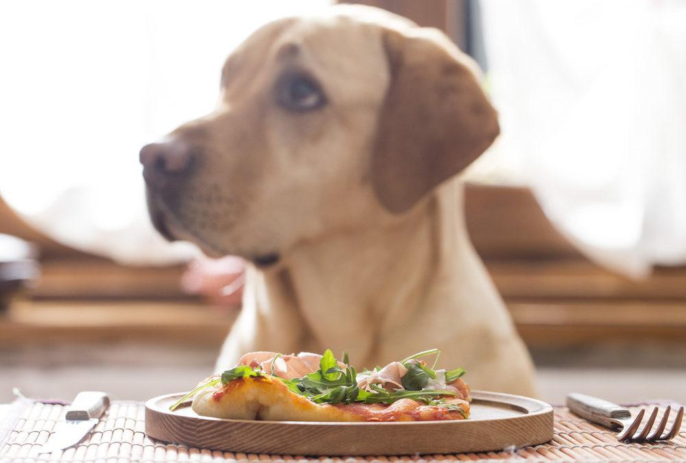 Heeft uw hond gluten- of graanvrij hondenvoer nodig?