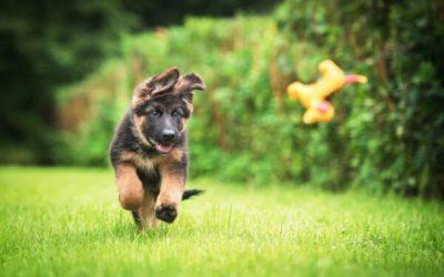 Puppy geboren? Hondenspullen die je zeker nodig hebt