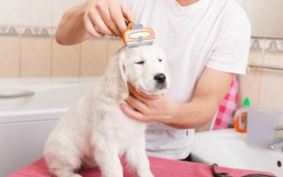 Handige hondenspullen voor trimsalons