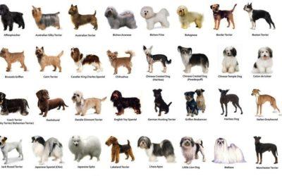 DOGPALACE de winkel voor alle honden en hondenrassen